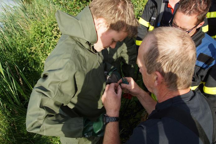 Brandweer redt meerkoet in Kaatsheuvel.