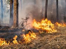Overzicht: branden teisteren de regio