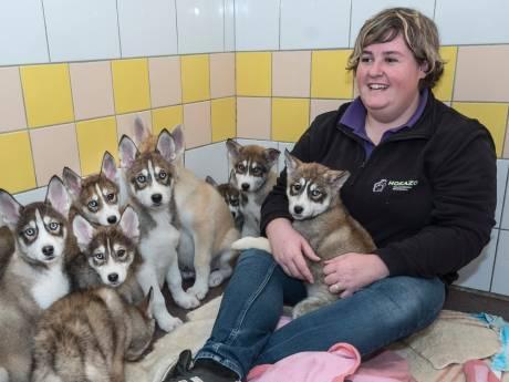 'Broodfokkers' dumpen negen zwaar verwaarloosde pups in velden bij Sint Agatha