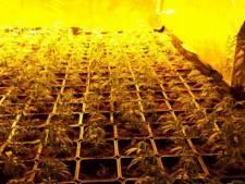 Grote drugsactie: negen aanhoudingen bij zes invallen in Parkstad