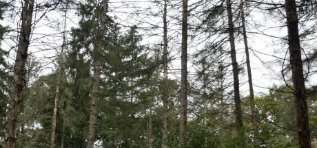 Het gaat slecht met onze bossen, héél erg slecht