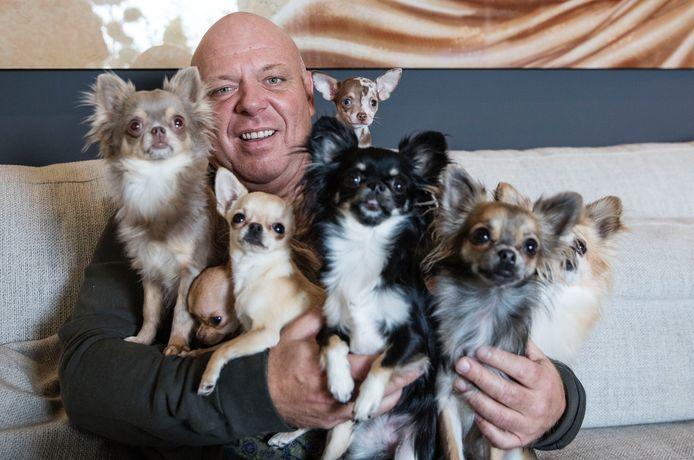 Peter Gillis met zijn 7 chichuhua's in Lommel