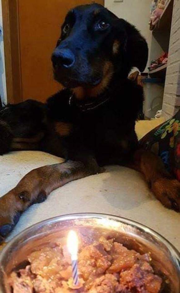Vic mocht afgelopen week een kaarsje voor zijn eerste verjaardag uitblazen. Zonder de Beleefhoeve had hij zijn  verjaardag waarschijnlijk niet gehaald.