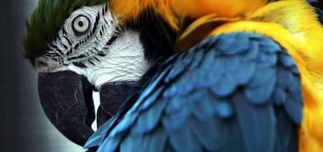 Vogelvereniging Tropika uit Dronten heft zichzelf op