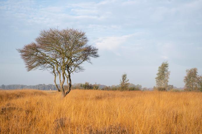 De grondwaterstand in het Wierdense Veld moet omhoog, zodat het hoogveen kan herstellen.