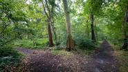 Glabbeek krijgt 20 hectare nieuw bos tegen 2030