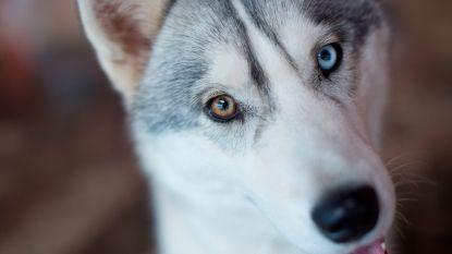 In New York verdwenen hond duikt na 18 maanden plots op in Florida