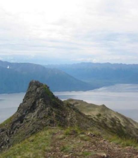 Beer doodt jonge hardloper in Alaska