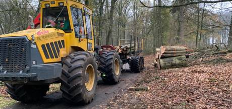 Elfrink roept op tot staken massale kap van bomen park Gulden Bodem Arnhem