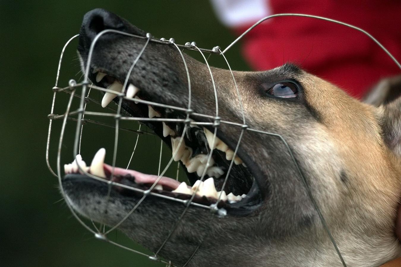 Een hond met een muilkorf.