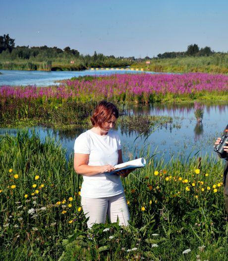 Bedreigde vogelsoorten vinden hun paradijs in de nieuwe natuur van De Noordwaard