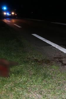 Spoor van bloed op de weg na aanrijding met ree in Velp