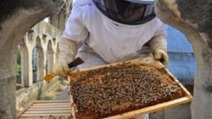 """Imker opgelucht: """"Mijn 200.000 bijen op dak Notre-Dame hebben brand overleefd"""""""
