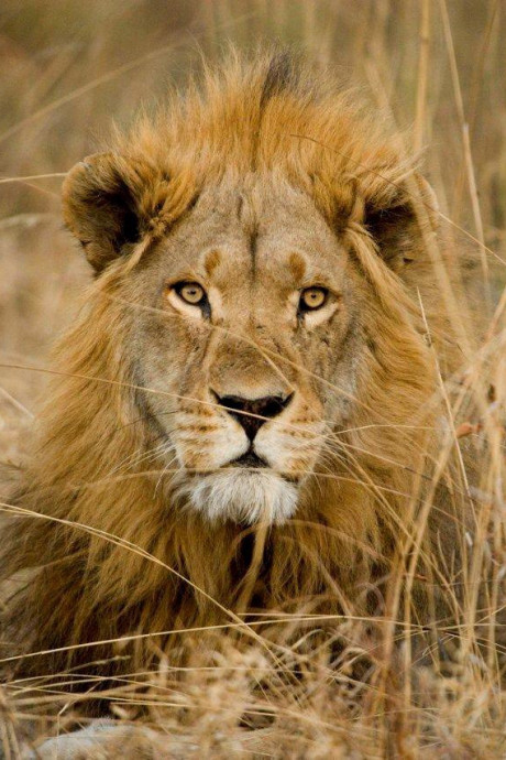 Namibië verkoopt duizend wilde dieren: 'Anders verhongeren ze door droogte'