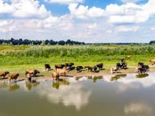 Groot onderzoek naar 'giftig oervlees': NVWA legt verkoop stil