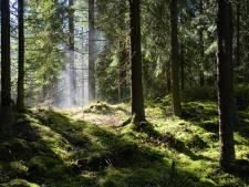 Un surveillant de la prison retrouvé pendu dans une forêt