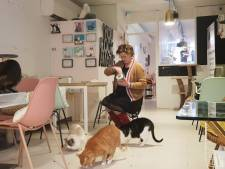 Kattencafé Mispoes in Den Bosch zit met kater en stevent af op faillissement
