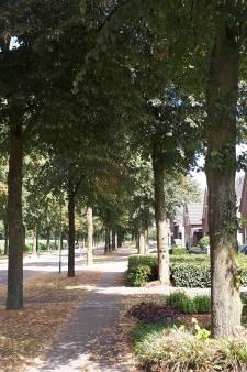 Bomen de Biezen Venhorst mogen plat