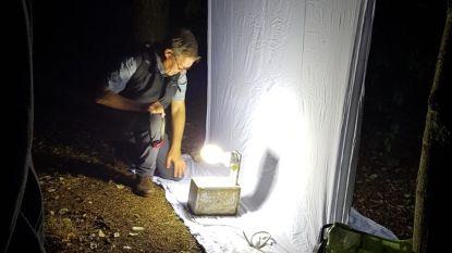 Jarenlang onderzoek naar nachtvlinders op Kalmthoutse Heide afgerond: meer dan 1.000 soorten ontdekt