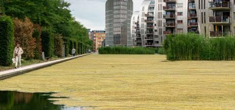 Groene Hofvijver in het Paleiskwartier: 'Dit wordt eerder regelmaat dan uitzondering'