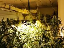 Politie rolt hennepkwekerij op in Sliedrecht: 500 planten