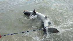 VIRAL3: Mannen vangen haai, maar die geeft zich niet zomaar gewonnen