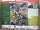 Informatiepaneel bij natuurgebied de Rijsvennen in Berghem
