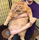 15,8 kilo weegt deze gezellige dikkerd en die kilo's moeten er grotendeels af.
