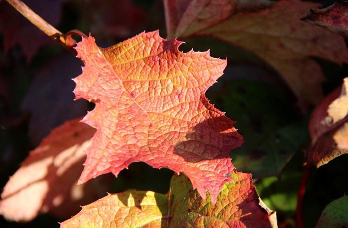 Herfst in Geldrop (lezersfoto).