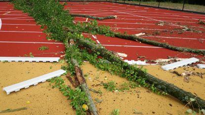 Boom waait om en komt op atletiekpiste in Osbroek terecht