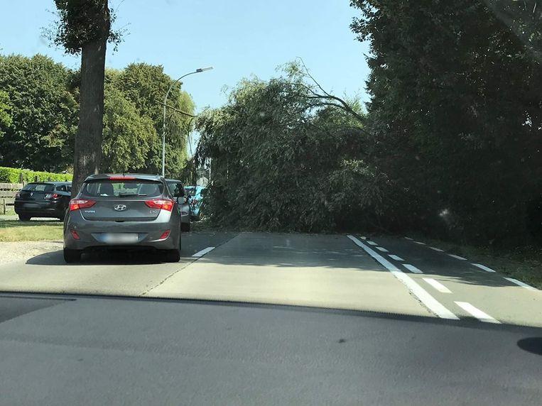De bomen kwamen op de Aalstersesteenweg terecht en versperden een groot deel van de weg.