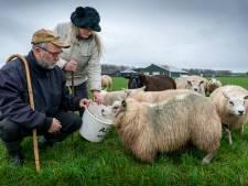 Hun schapen werden afgeslacht: 'Maar wij zijn niet de vijand van de wolf', zegt schapenhouder Jan