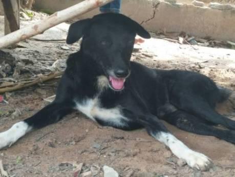 Thaise hond redt levend begraven baby