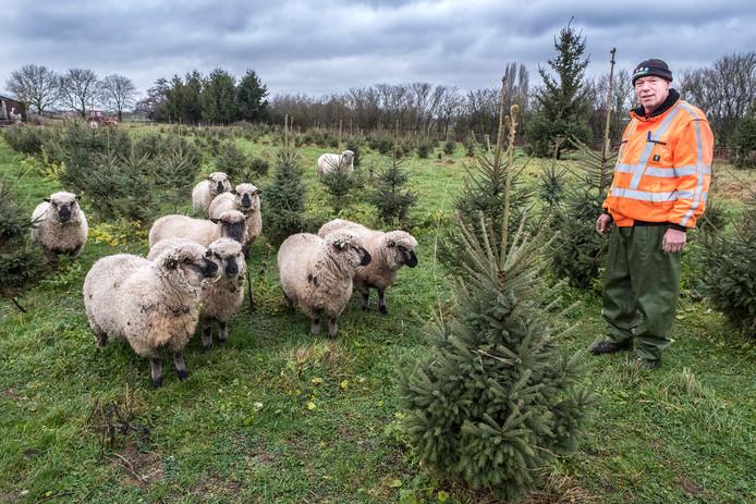 Jan-Willem Thunnissen tussen de schapen die het gras kort houden.