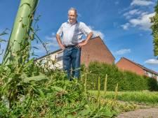 'Wildernis' in Hank en Dussen: 'Als er één auto staat borstelen ze het hele terrein niet'