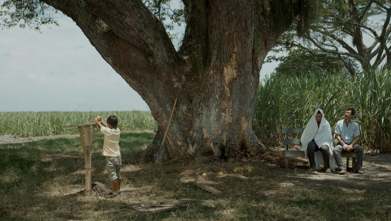 Acevedo plaatst zijn verhaal op de suikerrietvelden van Valle del Cauca Beeld La tierra y la sombra