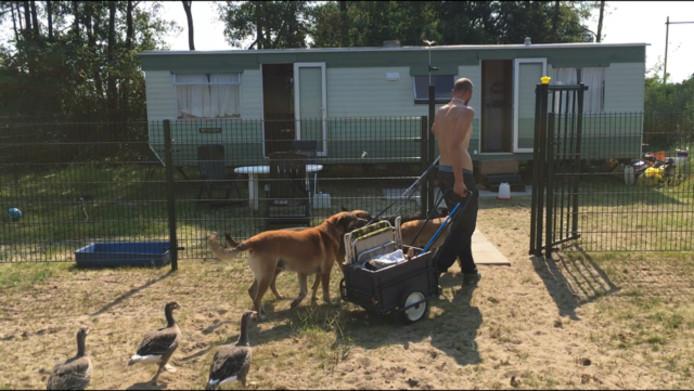 Jeffrey Claes met zijn honden en ganzen.