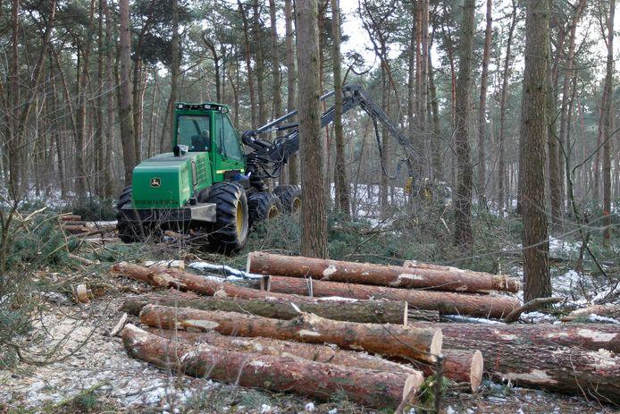 Uitdunwerkzaamheden in de Sonse bossen.