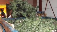 Twee drugsplantages opgerold
