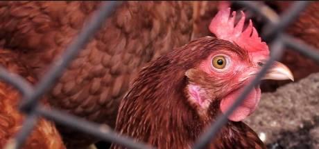 Sporen coronavirus gevonden op Braziliaanse kippenvleugels