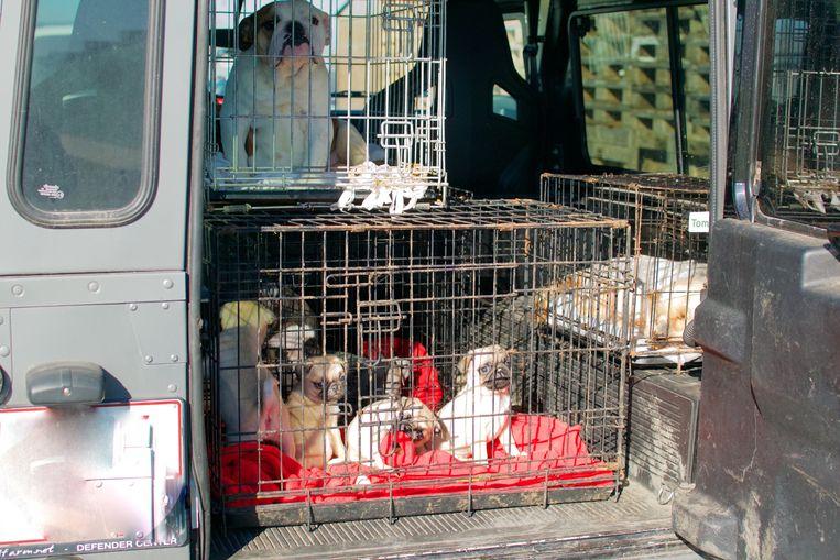 Enkele honden worden naar een opvangcentrum gebracht.