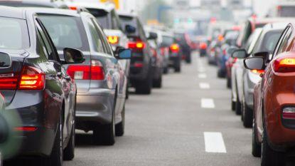 """Greenpeace: """"Veeteelt in Europa is slechter voor het klimaat dan alle auto's samen"""""""