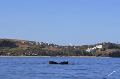 Encore une baleine retrouvée morte en Sicile avec l'estomac rempli de plastique