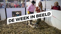 De Week in Beeld