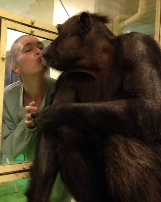 Dr. Kret met een chimpansee Ai die ze in Japan onderzocht.