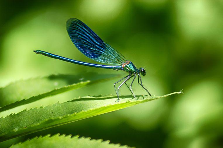 Insecten zijn enorm belangrijk voor de biodiversiteit.