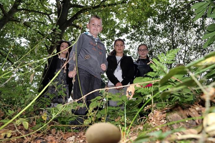 Door de droogte zijn er weinig paddenstoelen in het bos, maar de Scharrelkids weten ze te vinden. foto Chris van Klinken/pix4profs