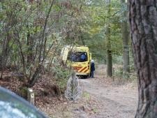 Wandelaar aangevallen door hoornaar in bossen Kaatsheuvel, man naar ziekenhuis