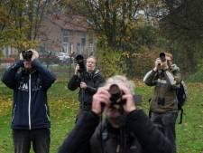 Opwinding onder de natuurfotografen: zeldzame vogel gespot in Geldermalsen