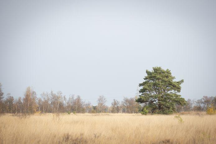 GroenLinks Hellendoorn en het Platform Progressief Wierden (PPW) zijn een actie begonnen om de Natura-2000 status van het Wierdense Veld te behouden.  De petitie is al door bijna 800 mensen getekend.